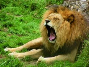 AZ ÁBRAHÁMI SZÖVETSÉG – Megáldom … és megátkozom – 2. rész
