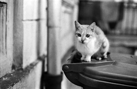 Elszaporodtak a kóbor macskák Jeruzsálemben